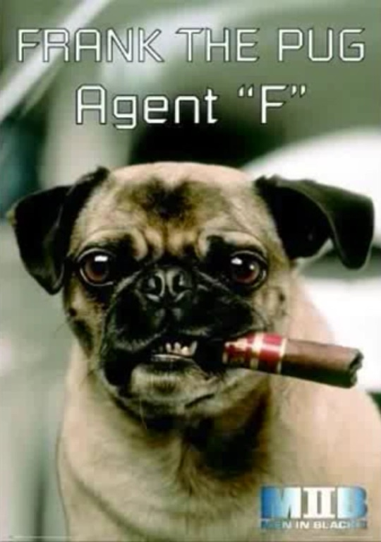 Frank the pug from MIB. by Ghostbuster30