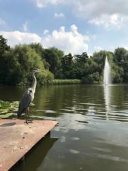 Heron's View