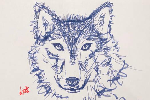 Wolf - Day 1
