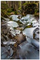 Escaping winter's grasp... by JamesRushforth
