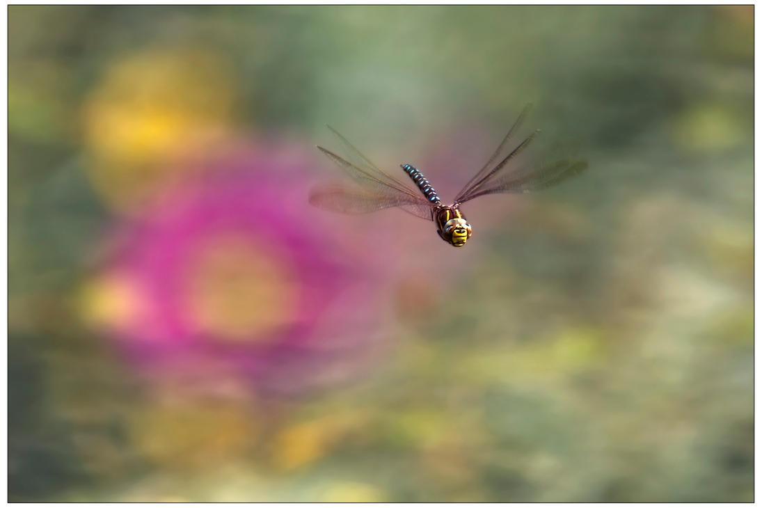 Dragonfly by JamesRushforth