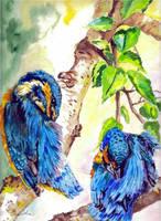 Kingfisher2 by danuta50