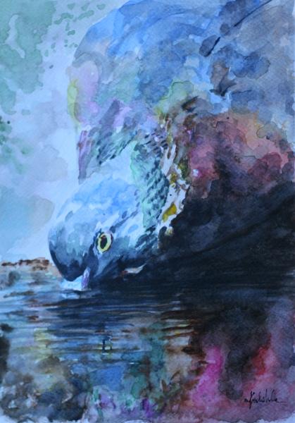Dove by danuta50