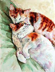 Kities by danuta50