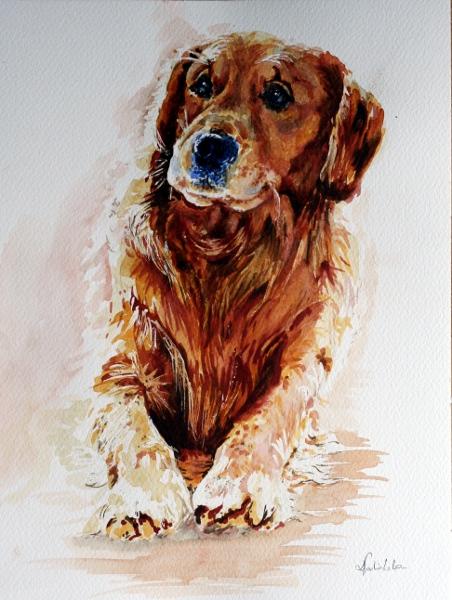 Dog by danuta50