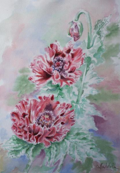 poppies by danuta50