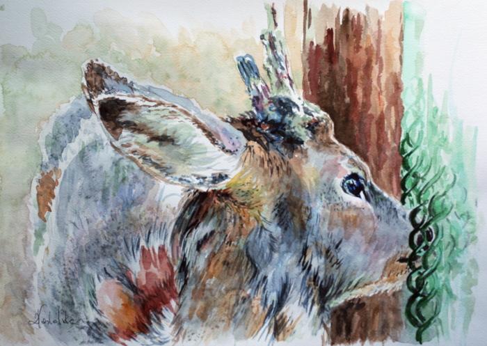 Goat by danuta50