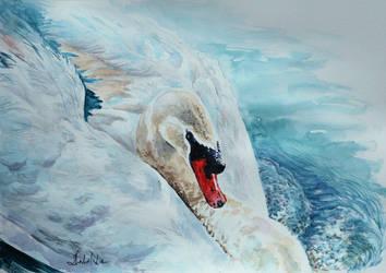 Swan by danuta50