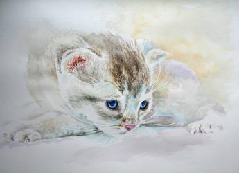 Kitty by danuta50