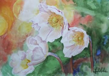 anemones by danuta50