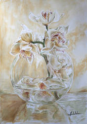 orchids by danuta50