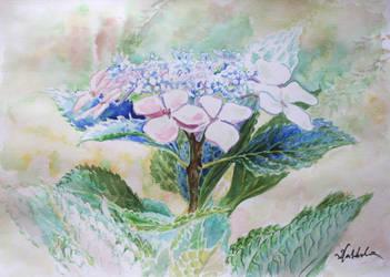 Hydrangeas by danuta50