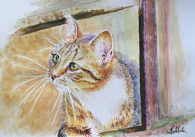In the window by danuta50