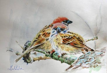 Sparrows by danuta50