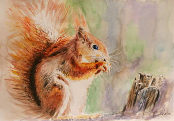 squirrel by danuta50