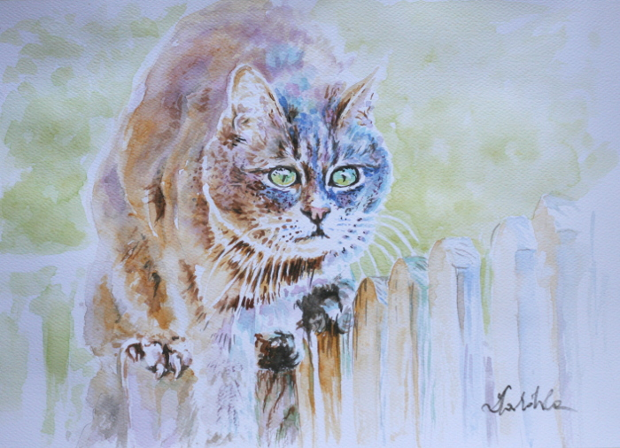 The cat by danuta50