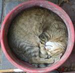 Cat by milena-pl