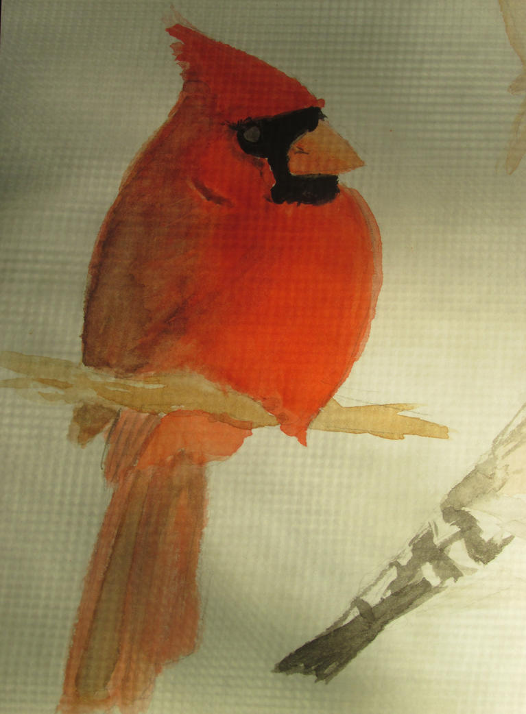 Northern Cardinal by ninjagiraffes234
