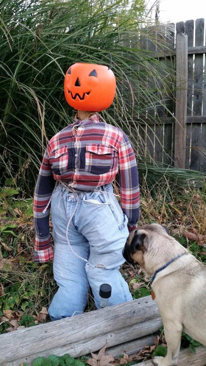 the pug and the scarecrow by 1Simplicity01