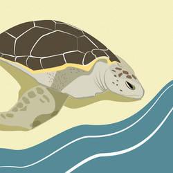 Turtle by Joliet82