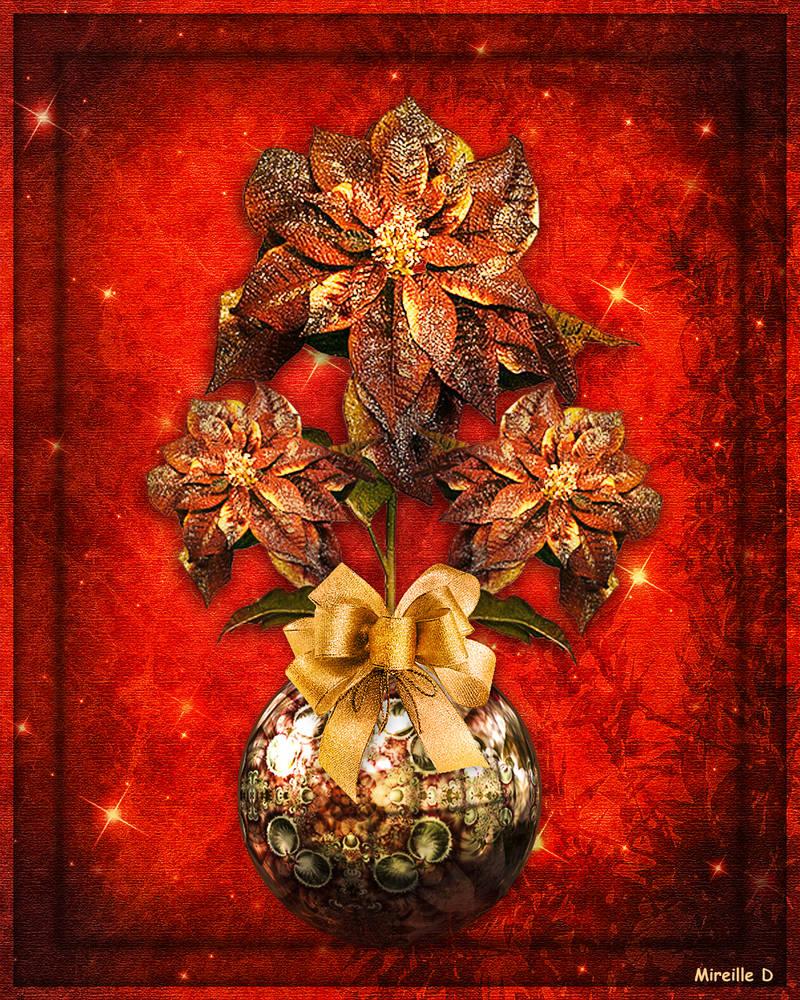 Roses de Noel