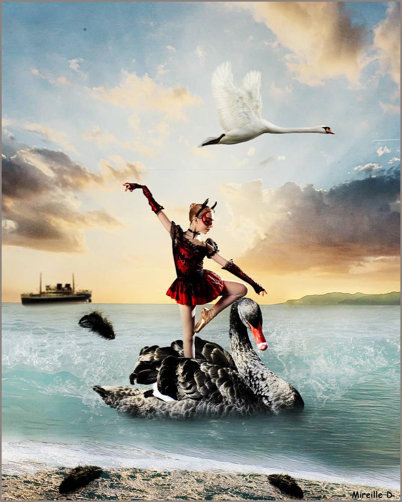 Danse du Cygne Aquatique
