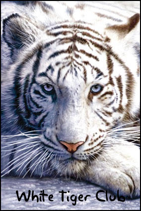 white-tigers-club (white tigers club) | deviantart
