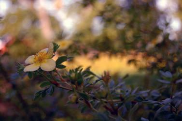 Little flower by emmaaii