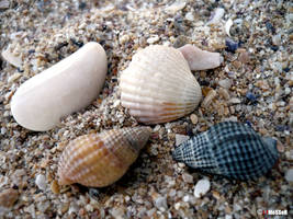 Sand of shells by danmesser