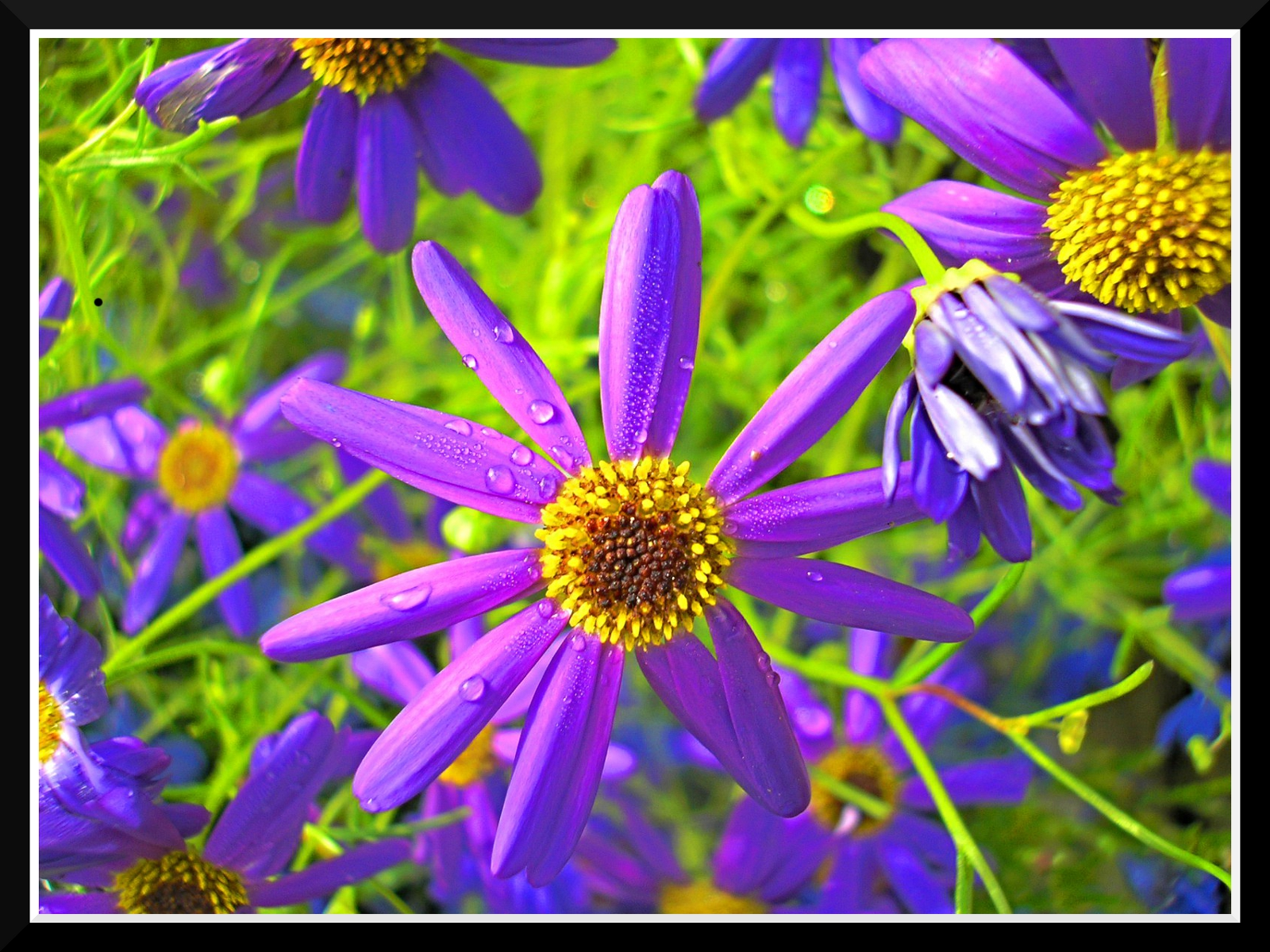 ... Purple Flowers In The Garden By Maryam2