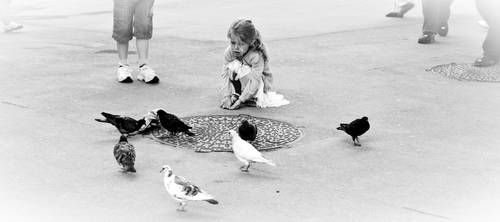 Talking with pigeons