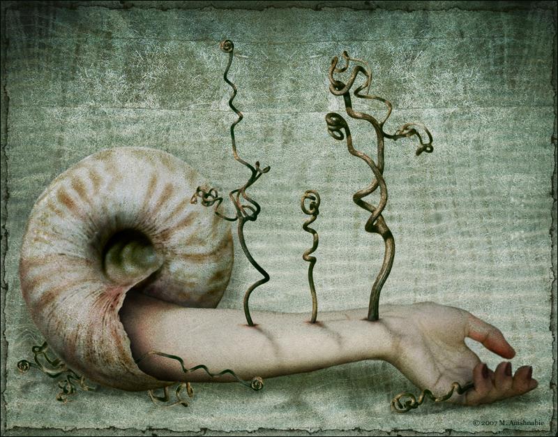 mollusc by fragilemuse-org