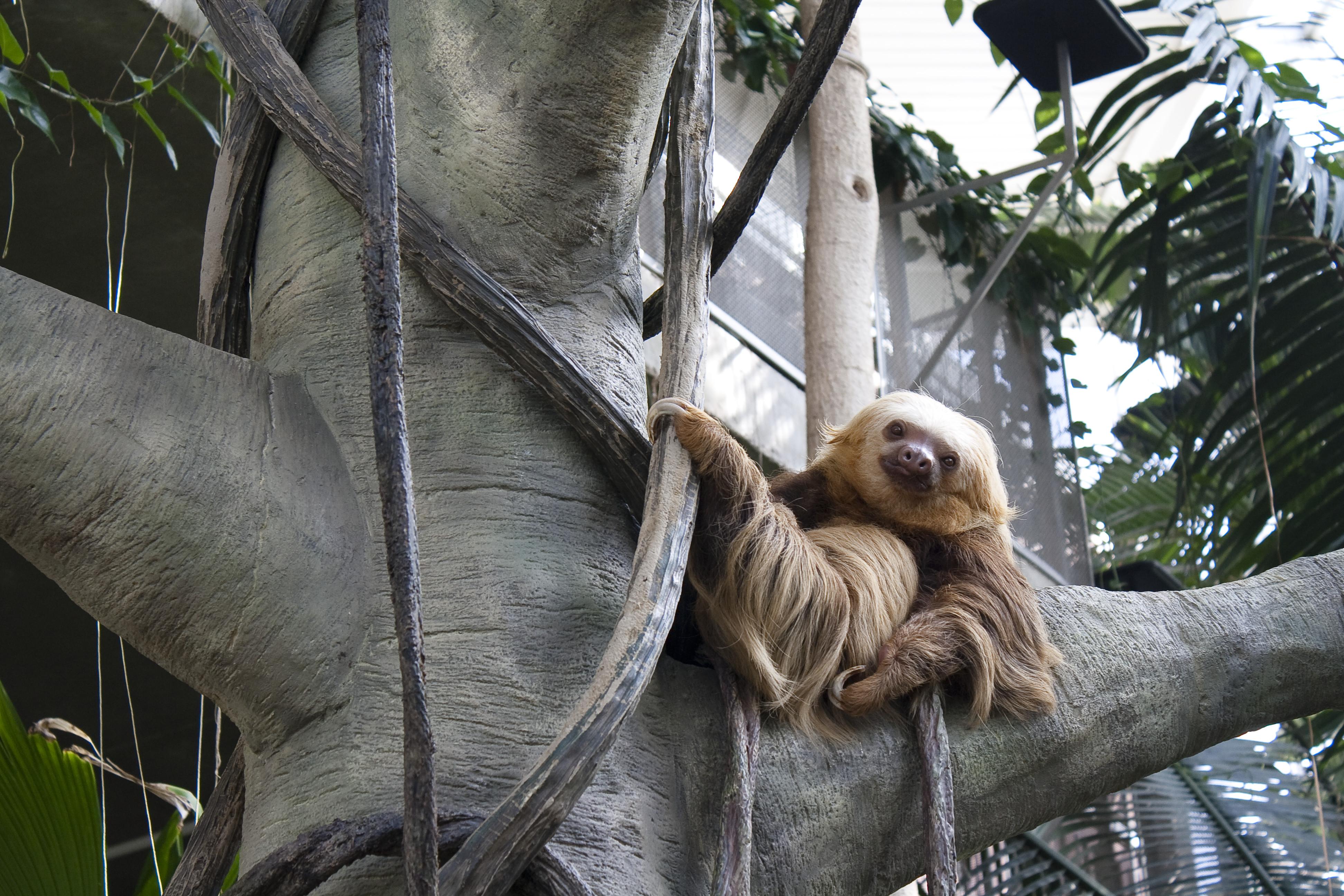 sloth by carro-stalk