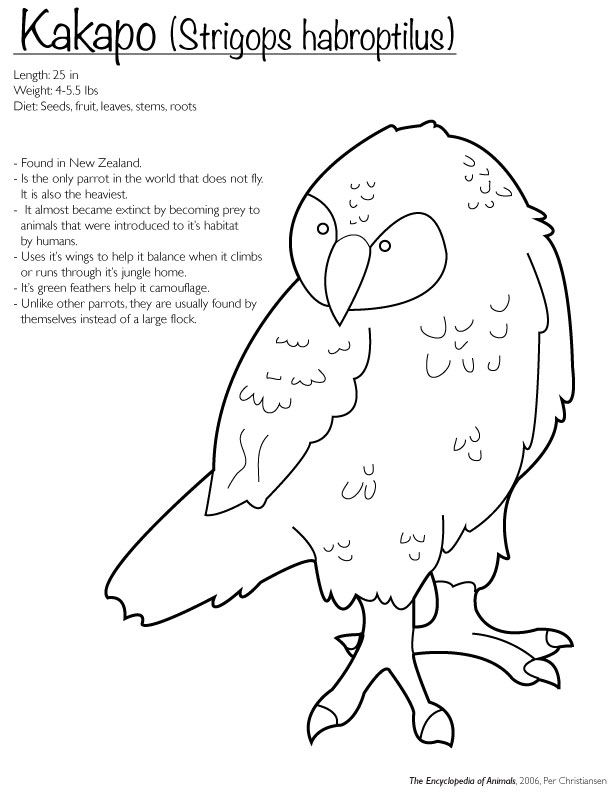 Kakapo Coloring Page By Finwitch On Deviantart