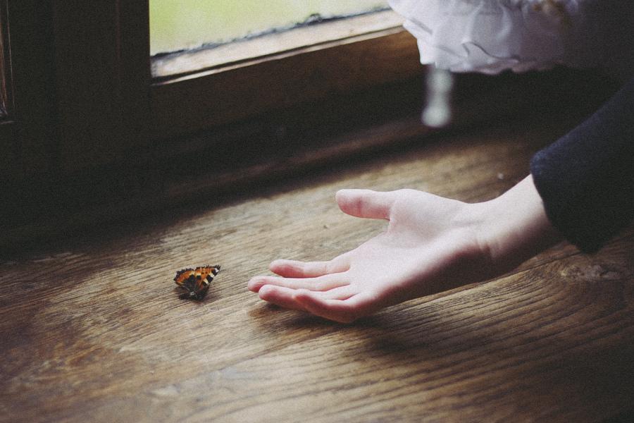 hello little butterfly ii by adayofsunrise
