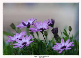 Colour Purple by livinginoblivion