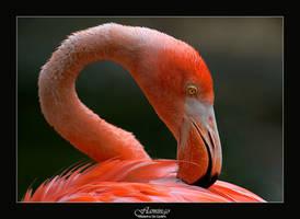 Flamingo by livinginoblivion