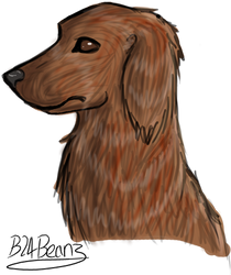Red setter by b24beanz