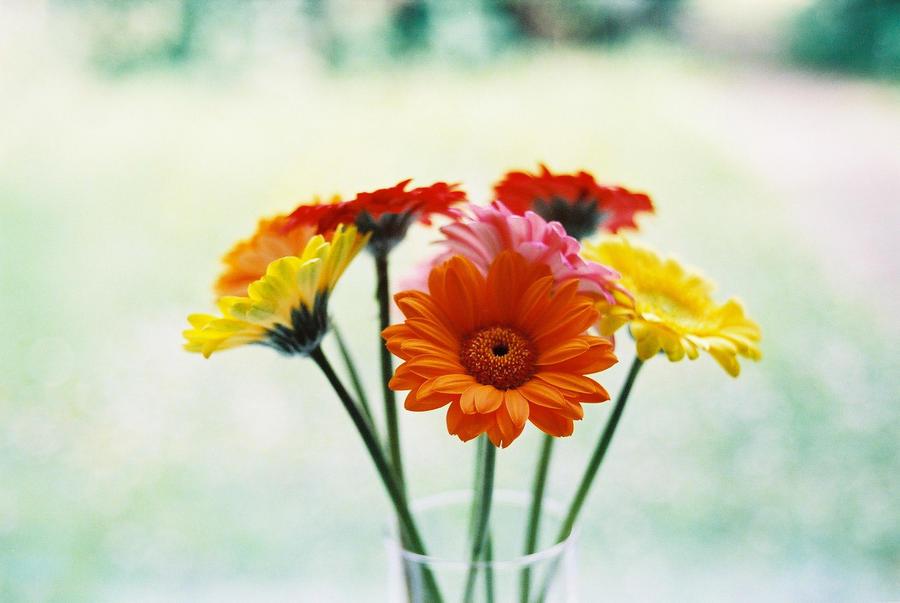 Flowerpot by D1stort3r