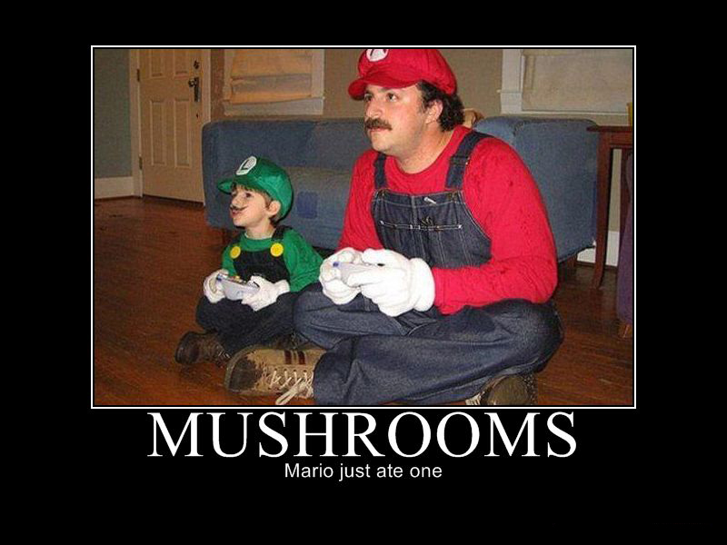 Mushrooms by connolystudios2