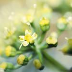 kwiat by tsztachanski