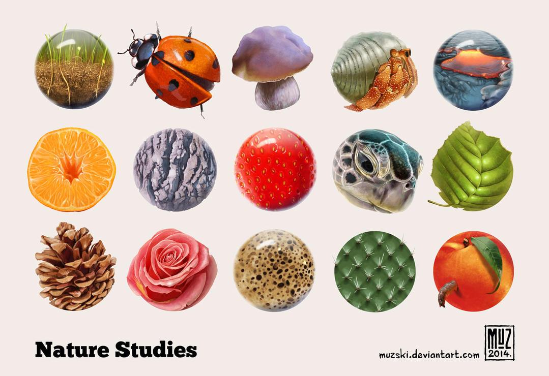 Nature Studies by muzski