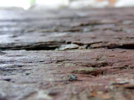 Old wood close up by akenator