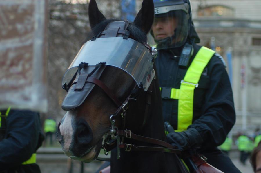 riot horse