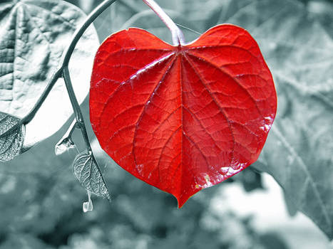 Hearty...