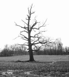 Old Tree III by fivepi0nt
