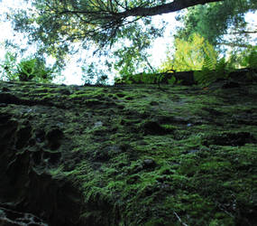 Moss Wall II by fivepi0nt