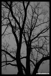 Dark Tree by fivepi0nt