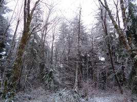 Snow at new place, trees 2 by GeneralDurandal