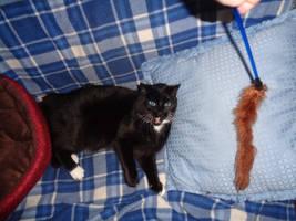 Betty sees her prey by GeneralDurandal